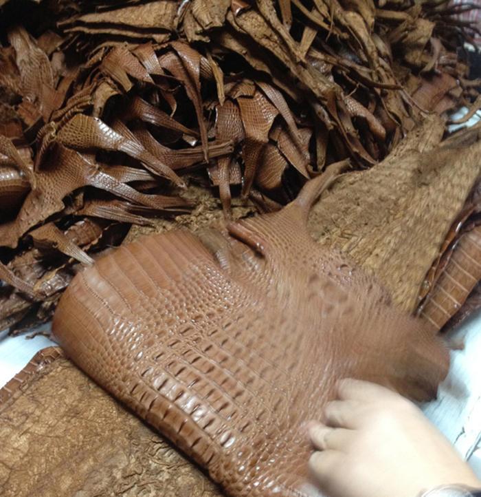 Brown Alligator Skin