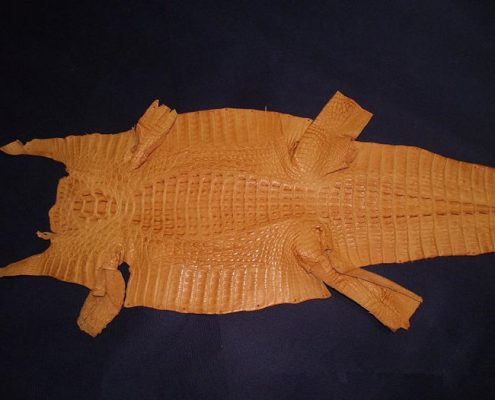 Genuine Alligator Skin