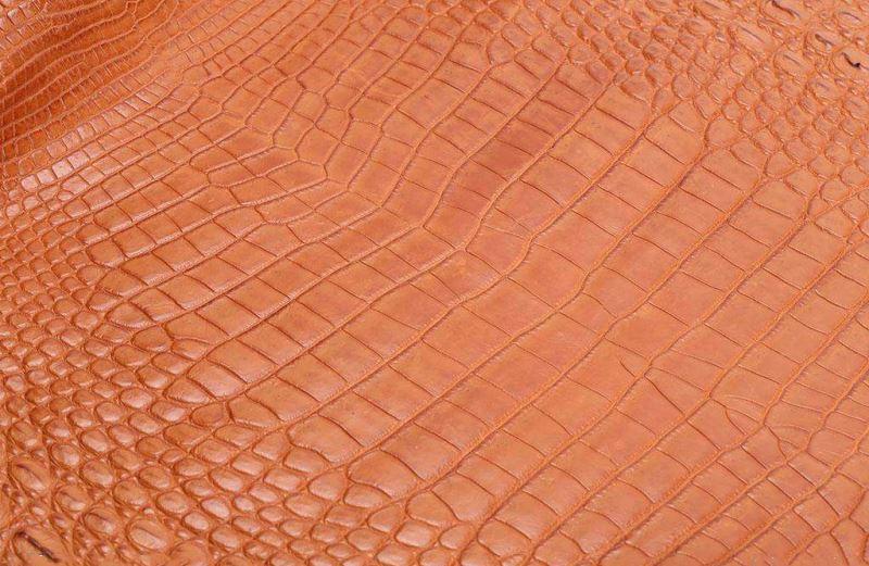 The skin of American Alligators